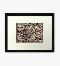 Bandicoot Framed Print