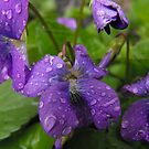 Life Giving Rain... by Tracy Wazny