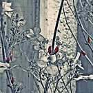 Bud Red by Stephanie Hillson