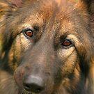 Eyes by JGetsinger