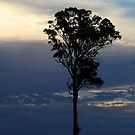 Tree Just Before The Sunset by Evita