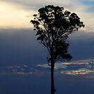 Baum kurz vor dem Sonnenuntergang von Evita