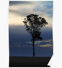 Baum kurz vor dem Sonnenuntergang Poster