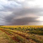 Stormy Sorghum by Penny Kittel