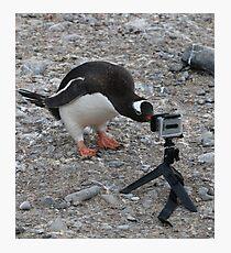 Gentoo Penguin in Antarctica & Go Pro  Photographic Print