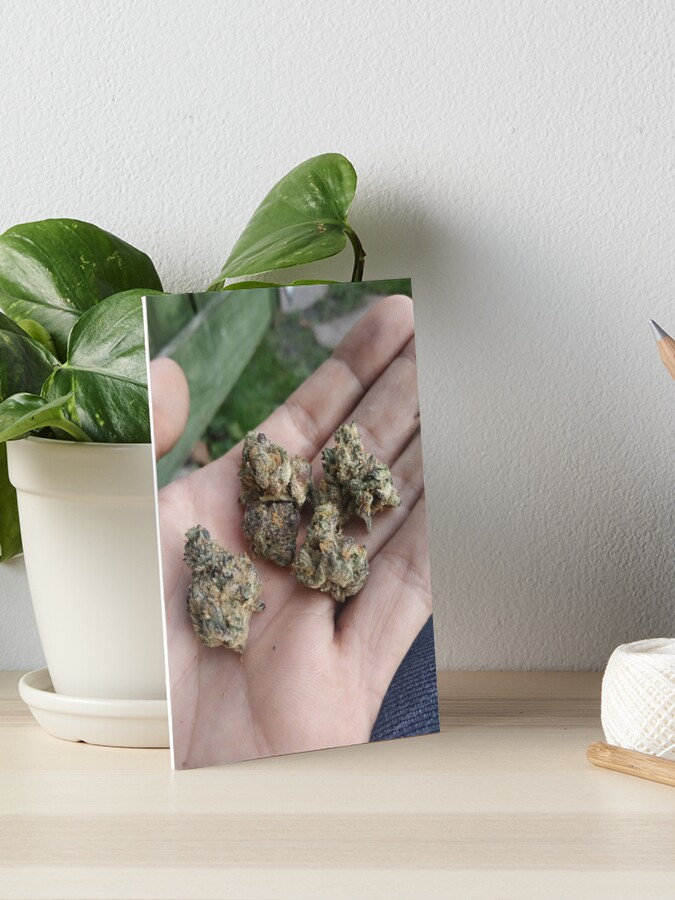 Jungle boys gelato buds 420 Ganja   Art Board Print