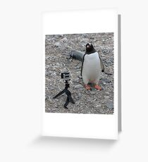 Gentoo Penguin in Antarctica & Go Pro - 4  Greeting Card