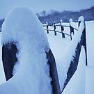 Fence Frosting by Kelly Chiara