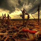 The Harvest by Evan Ludes