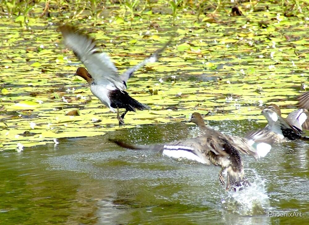 Ducks Away by PhoenixArt