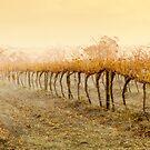 Wet Vineyard by Ben Goode