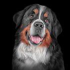 Drawing Bernese Mountain Dog by bonidog
