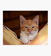 cute ginger cat Photographic Print
