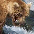 Brown Bear with Salmon by chibiphoto