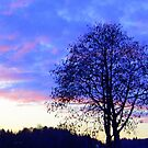 Sunset in Blue & Pink featured in 4 groups (see below for details) by ©The Creative  Minds