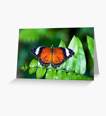 Orange Lacewing Greeting Card