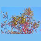 Dumbleyung Gum Tree blue by scallyart