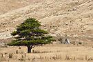 A Tree by Werner Padarin