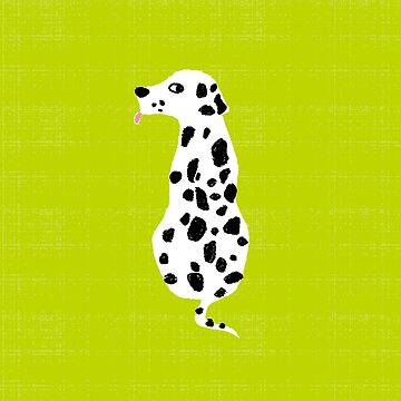Dalmatian by taichi