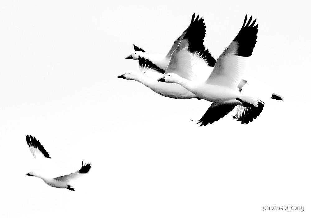 How It Feels To Be Free by photosbytony