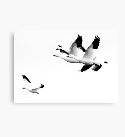 How It Feels To Be Free Canvas Print