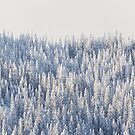 Winter Forest von nurmut