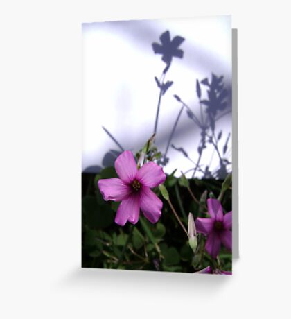 Flowers and Shadows Greeting Card