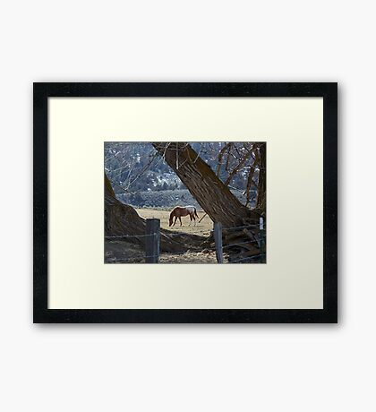 Appaloosa Framed by Willows Framed Print