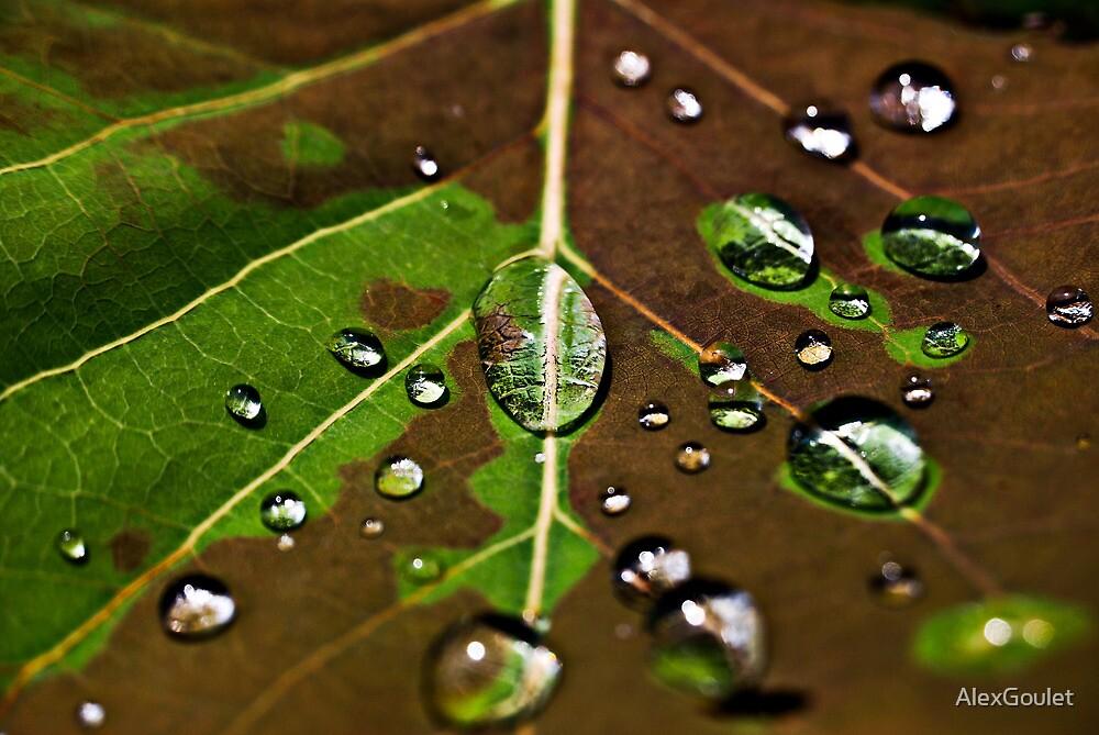 Rain by AlexGoulet