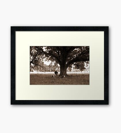 A Good Season, Uralla, Northern Tablelands, NSW, Australia Framed Print