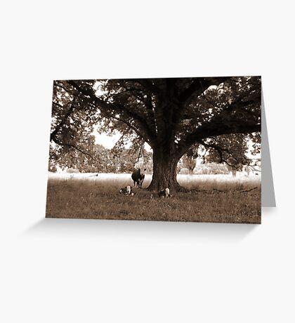 A Good Season, Uralla, Northern Tablelands, NSW, Australia Greeting Card