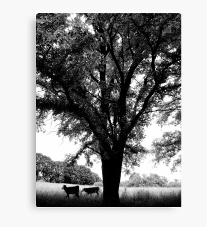 Country Life - Uralla, Rural NSW, Australia Canvas Print
