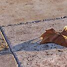 Maple Leaf on Travertine  by Ostar-Digital