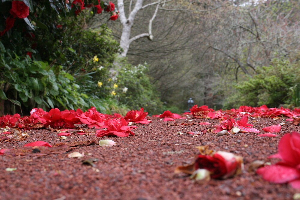 red rocky earth by alleyb