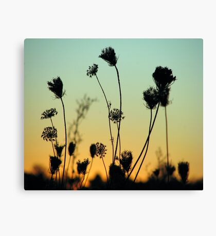 Night Must Fall Canvas Print