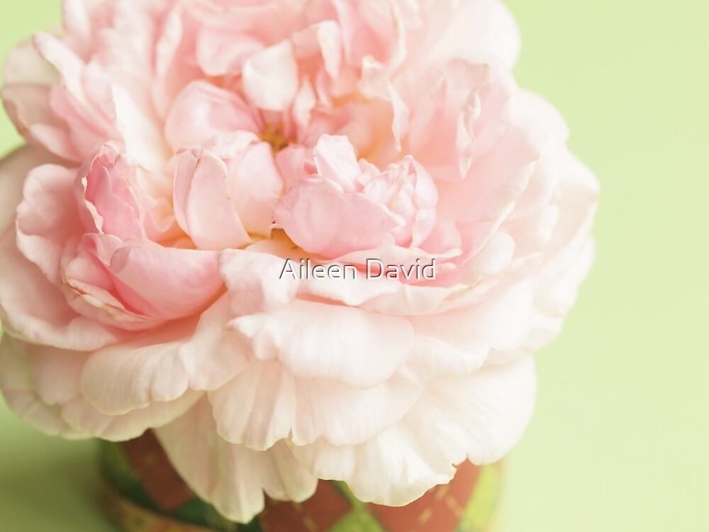 Little Miss Moss Rose by Aileen David
