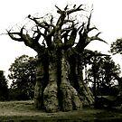 Baobab by Amni