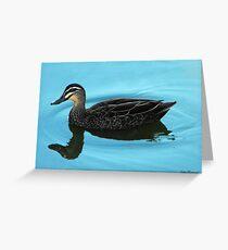 Mallard duck, Anas platyrhynchos Greeting Card