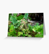 Dragonfly, Anisoptera Greeting Card