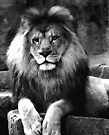 Lion in black and white by jammingene