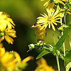 Yellow In Yellow by Deb Oppermann
