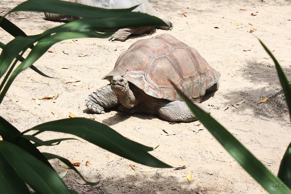 turtle by xeric