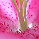 Bumpy Petals by ShotsOfLove