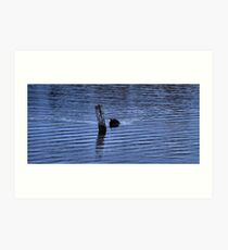 Cool Blue Coot Art Print