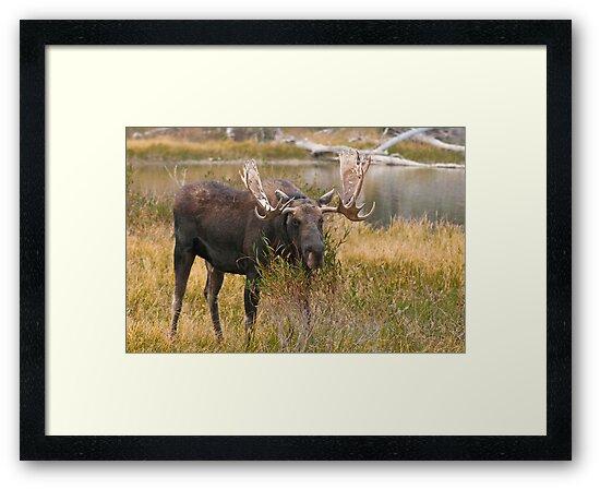 Bull Moose II by Gary Lengyel