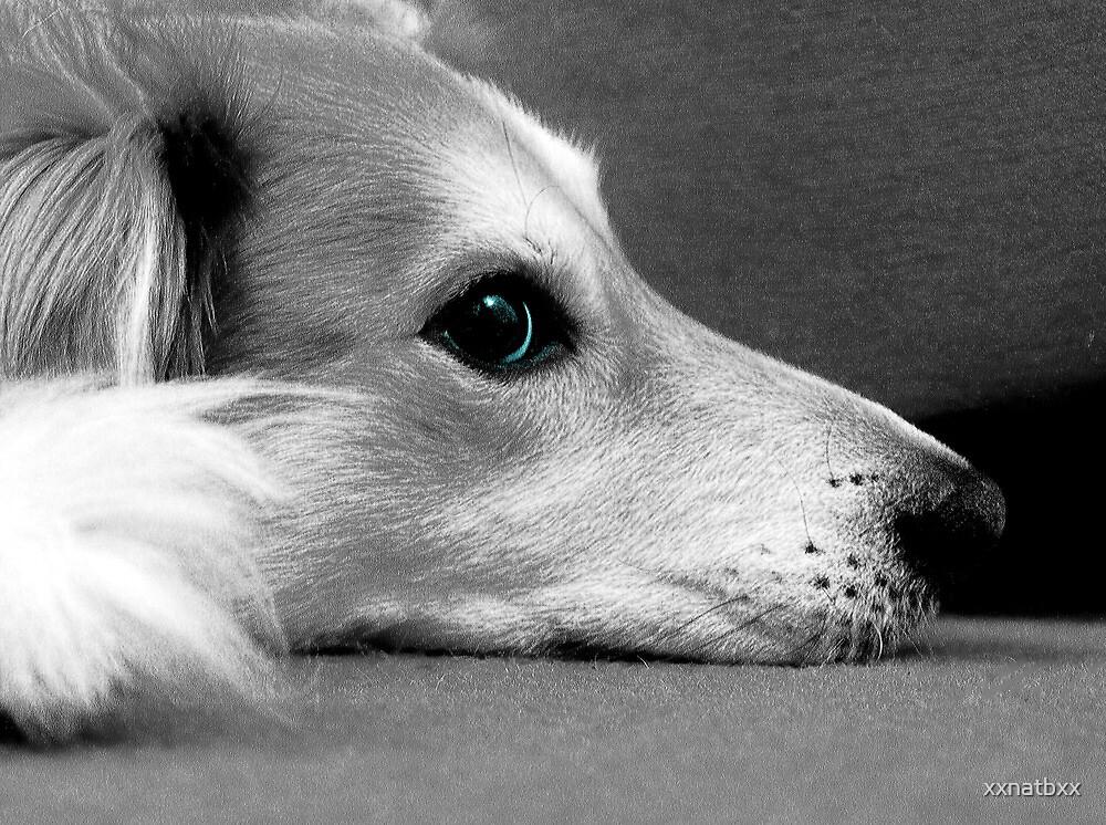 saz black and white blue eyes by xxnatbxx