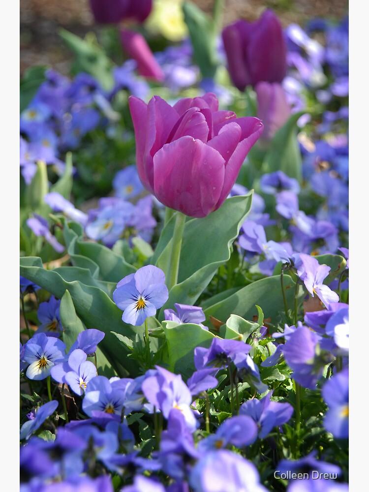 Happy Spring! by colgdrew