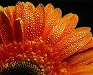 Orange Pearls by Ingrid Beddoes