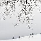 Bäume an den Pisten von metriognome