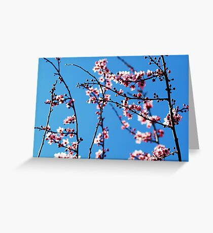 Ahh... Spring! Greeting Card